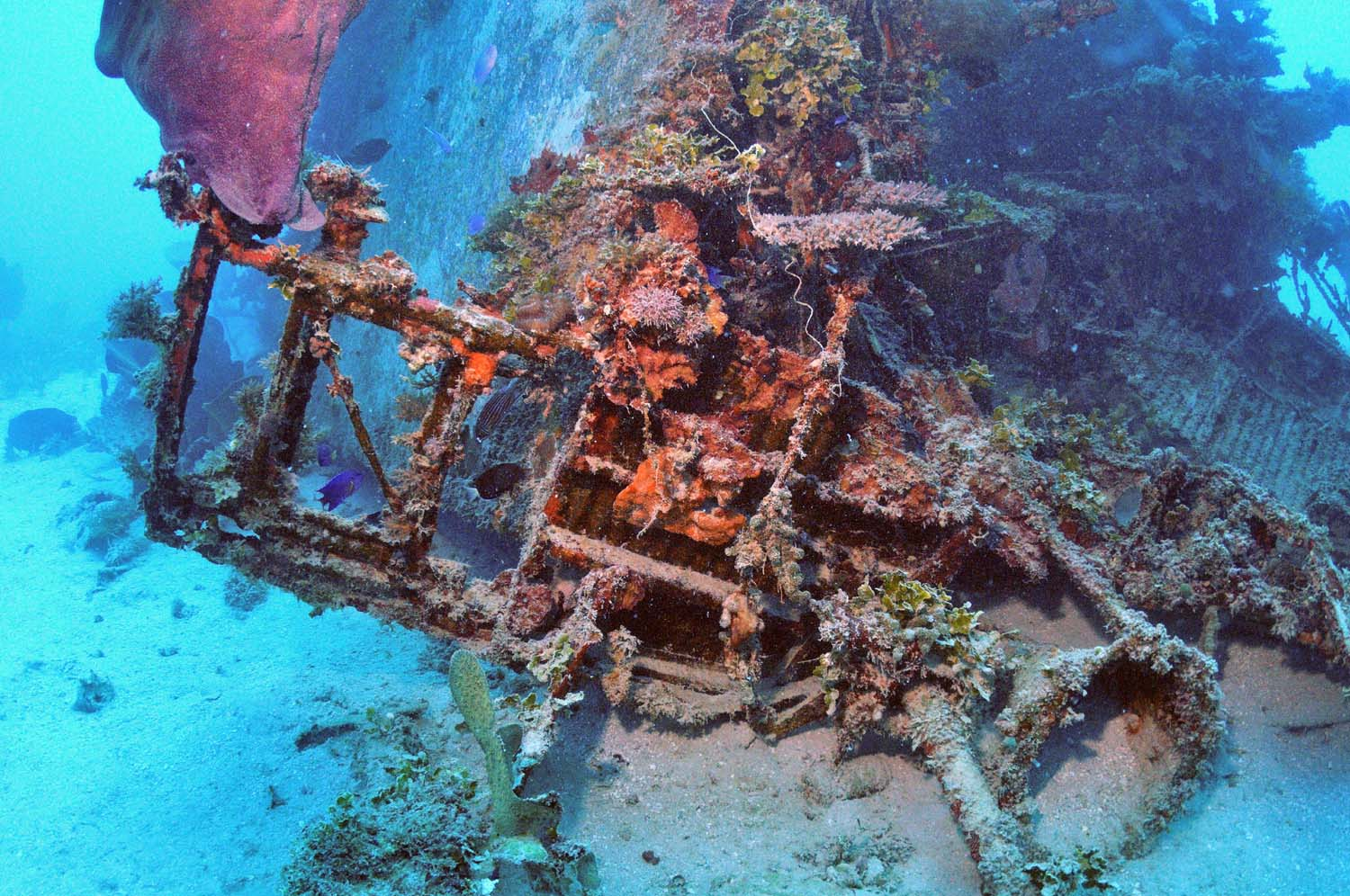 The use of flashlights offer the divers the chance to see the colours of marine life attached on the float plane wreck