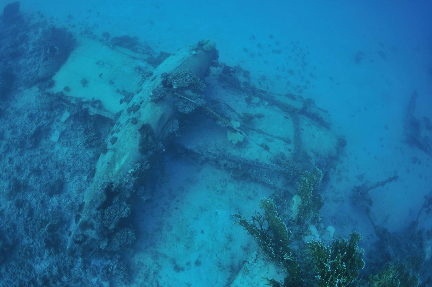 Large parts of this majestic WW2 floatplane can be seen, as the divers descend to the debris field