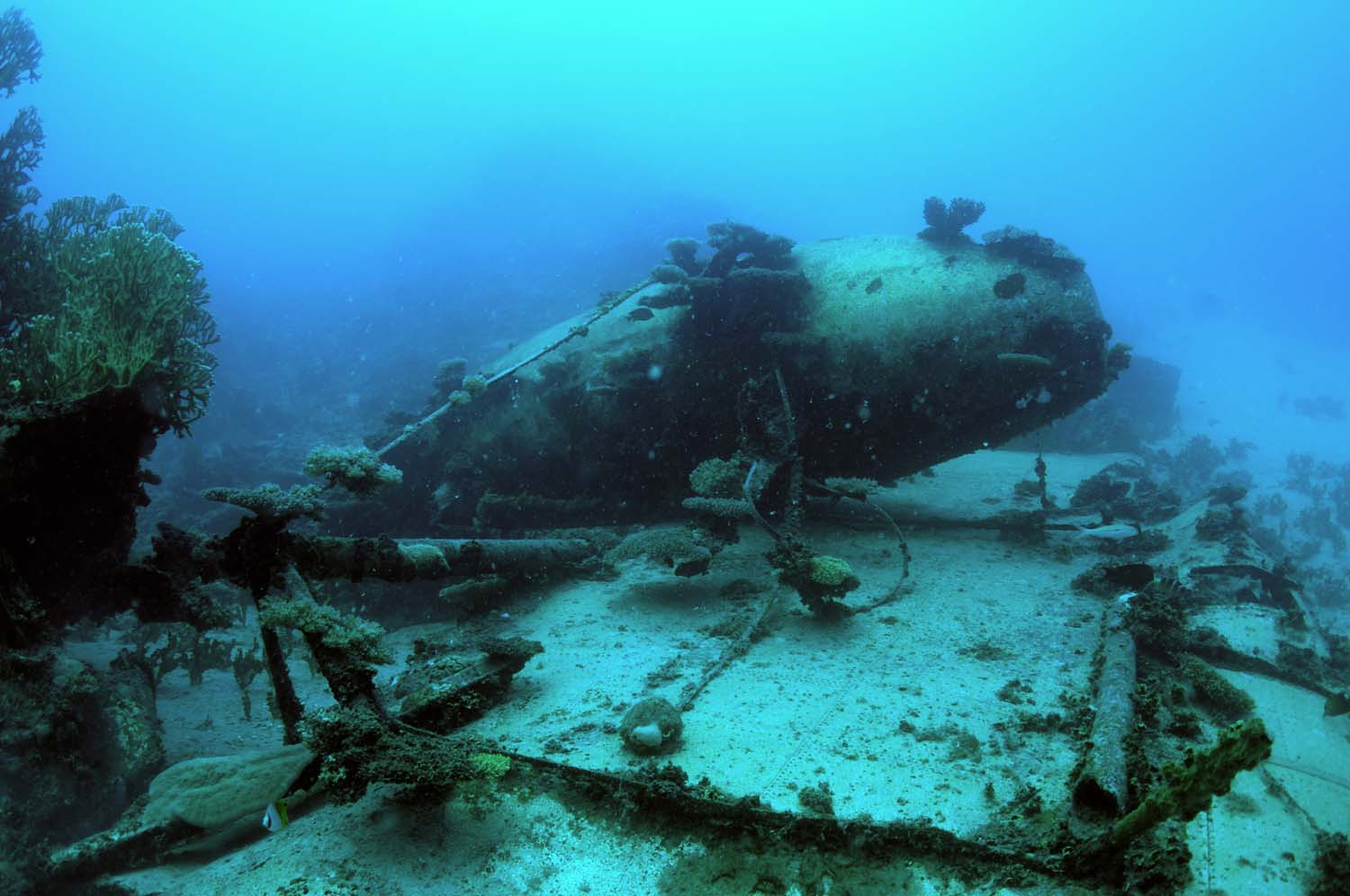Divers can hover around the wreck and explore the debris field