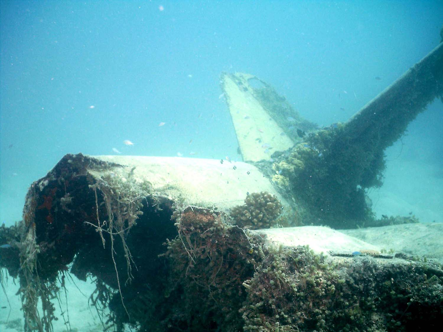 A legend of the skies, the once feared Zero fighter now lies on the seabed