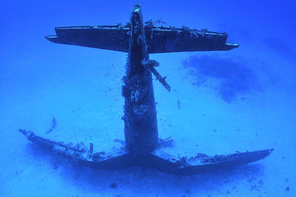 Scuba divers are offered with a unique sight, as they approach the iconic WW2 fighter wrecksite.