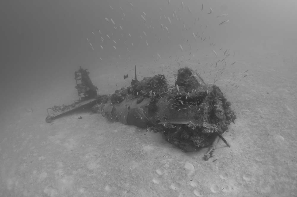 A Wildcat sitting on the sandy seabed