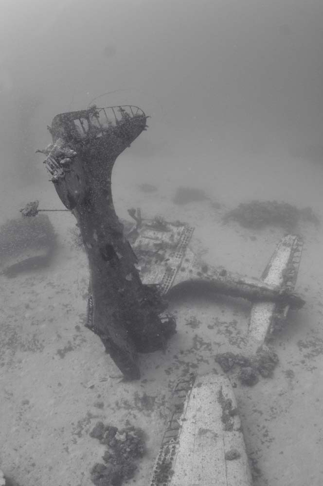 The most SBD's to be seen in one dive are at a site called '13 SBDs' or '13 Planes'.