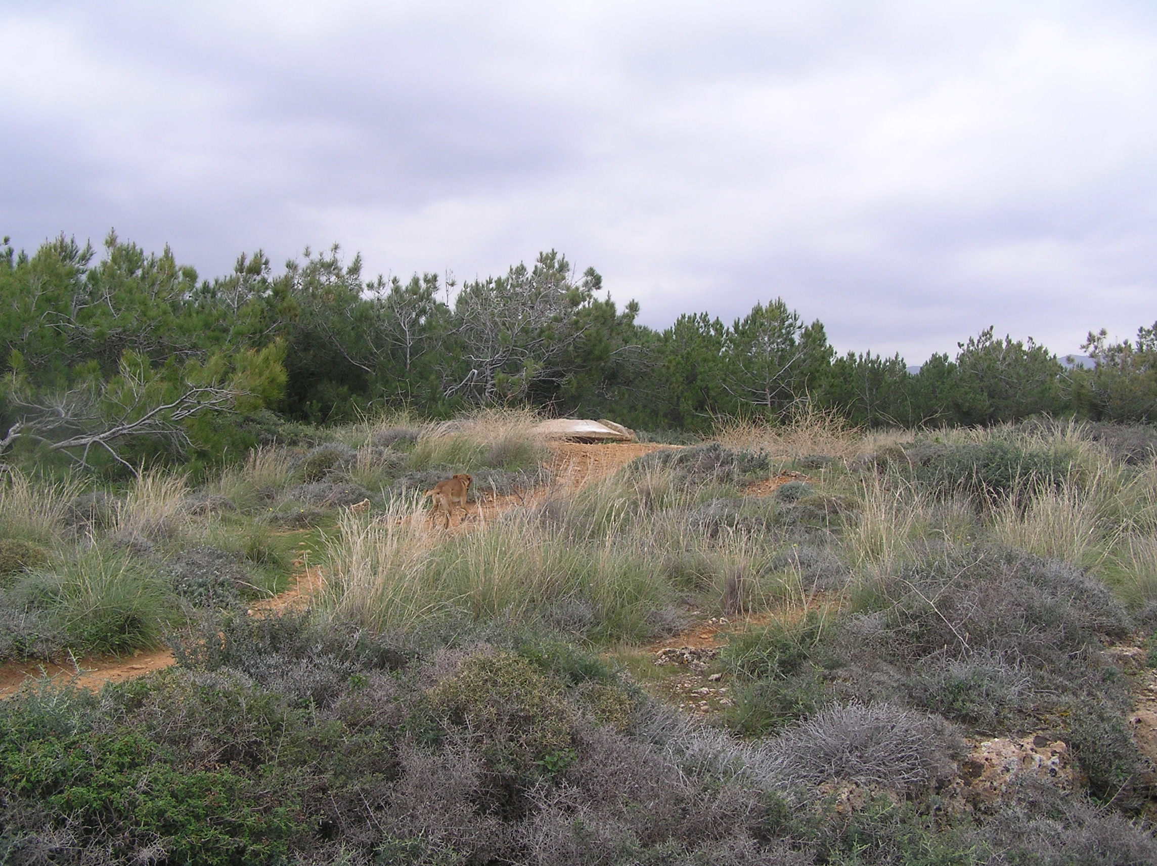 The bunkers are hidden in bushes today.