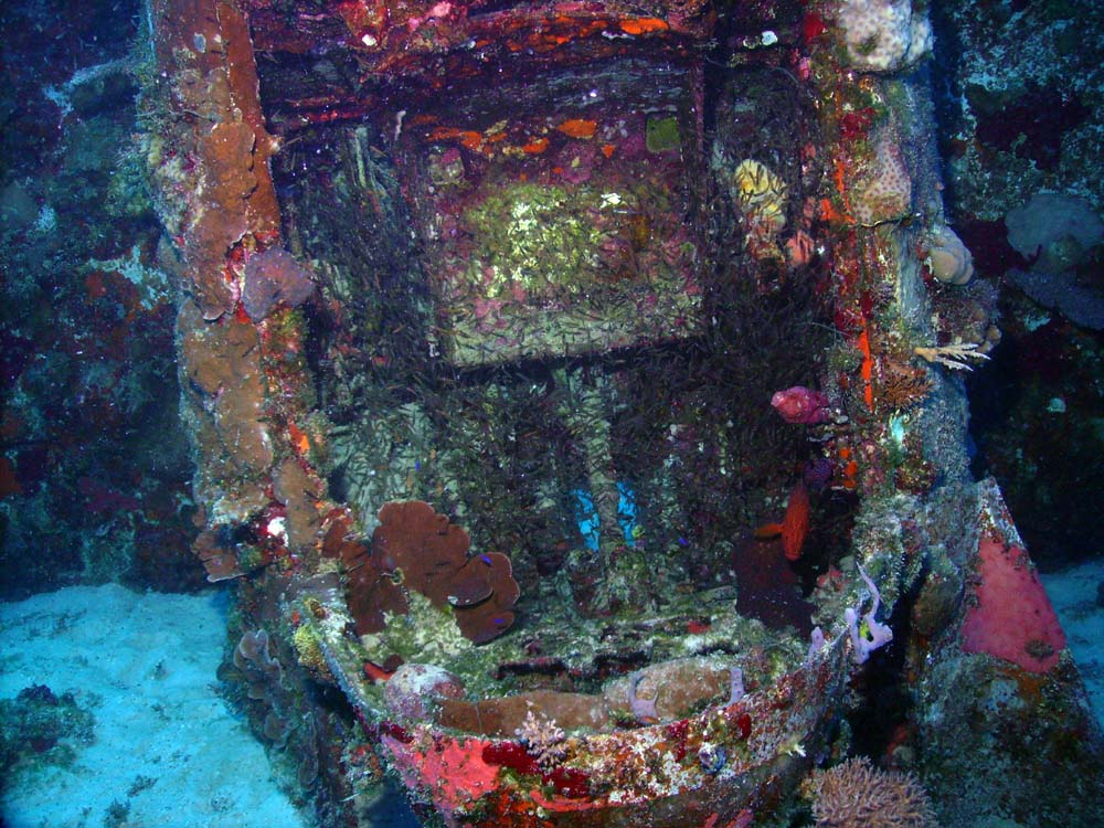 Covered in marine growth and coral, the pilot's seat and control stick of this nose-down SBD can still be seen.